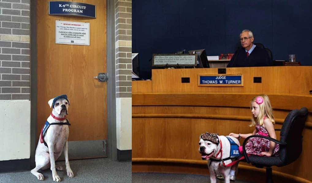 A Vida Dessa Garotinha Mudou Para Sempre Por Causa De Cão Surdo
