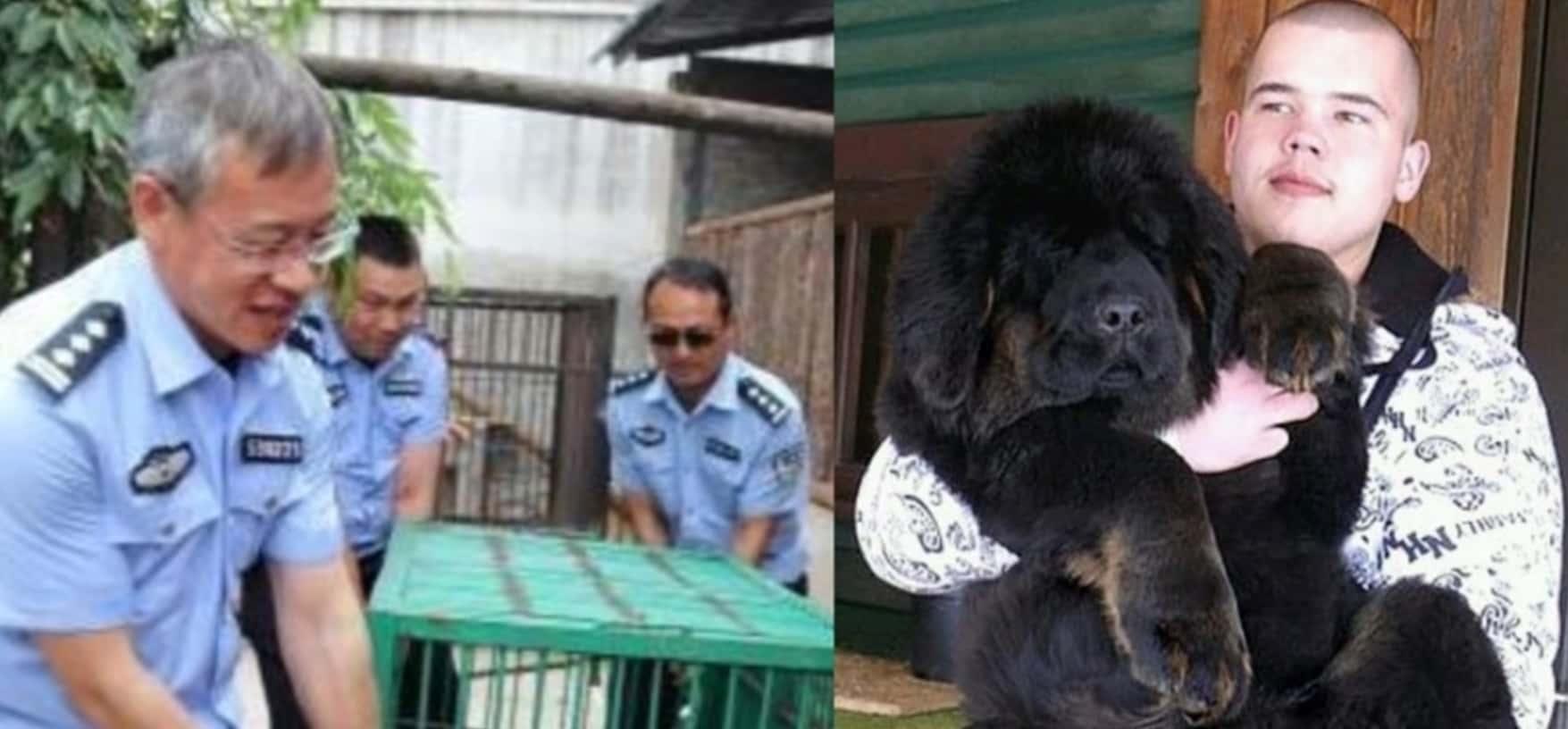 旅行先で子犬を拾いペットとして飼うことにしたある中国人家族。しかしその犬には誰もが驚くような秘密が隠されていたのです。